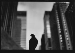 Untitled #30 (Pigeon 5th Avenue) from New York - Black and White, Street Photo