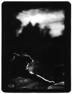 Untitled (Cat) - Black and White, Animal Photography, Film Noir, Contemporary