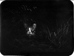 Untitled (Cat in the bush) - Nature, Animals, Portrait, Drama, Black and White