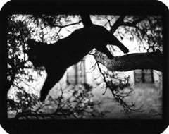 Untitled (Cat Jumping) - Animals, Trees, Architecture, Black and White
