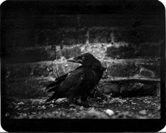 Untitled (Crow) - Animals, Birds, Black and White, Brick Walls