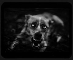 Untitled (Dog) - Animals, Black and White, Dramatic, Portrait, Canine