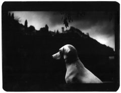 Untitled (Dog Sitting) - Black and White, Animal Photography, Film Noir