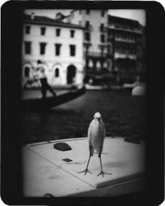 Untitled (Heron Venice) - Black and White, Animal Photography, Travel, Italy