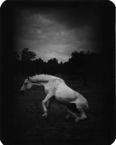Untitled (Horse Standing Up) - Animals, Nature, Fields, Black and White
