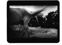 Untitled (Skinny Horse) - Black and White, Animal Photography, Contemporary