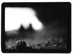 Untitled (Snail) - Black and White, Animal Photography, Contemporary, Film Noir