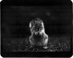 Untitled (Squirrel) - Black and White, Animal Photography, Nature, Fauna