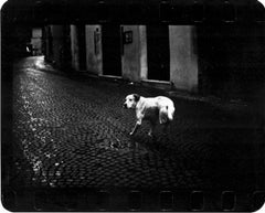 Untitled (Three Legged Dog) - Street Photography, Nighttime, Animals