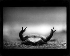 Untitled (Toad Upside Down) - Black and White, Animal Photography, Nature