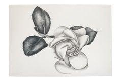 lack Rose - Original Etching by Giacomo Porzano - 1972