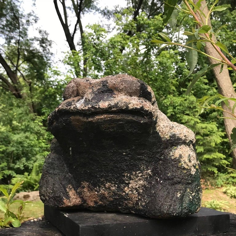 Taisho Giant Burly Japanese Antique Stone Frog Found In Vermont Tree, 17
