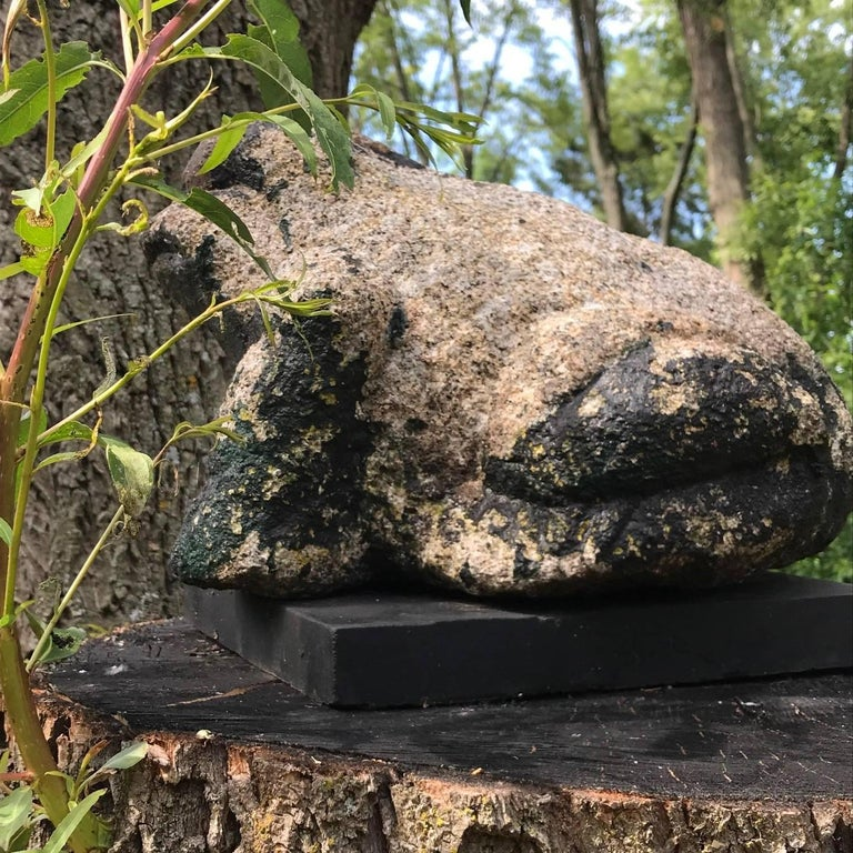 Giant Burly Japanese Antique Stone Frog Found In Vermont Tree, 17