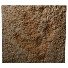 Giant Jurassic Dinosaur Theropod Footprint Fossil, 150 Million Years Old