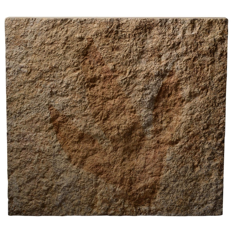 Giant Jurassic Dinosaur Theropod Footprint Fossil, 150 Million Years Old For Sale