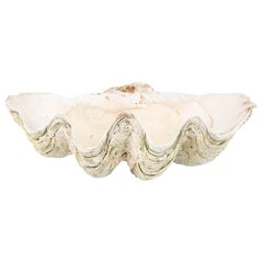 Giant Scalloped Clam Shell Centerpiece