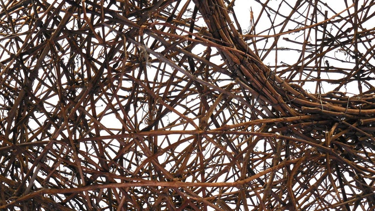 Gigantic Grapevine Bird's Nest Sculpture For Sale 9