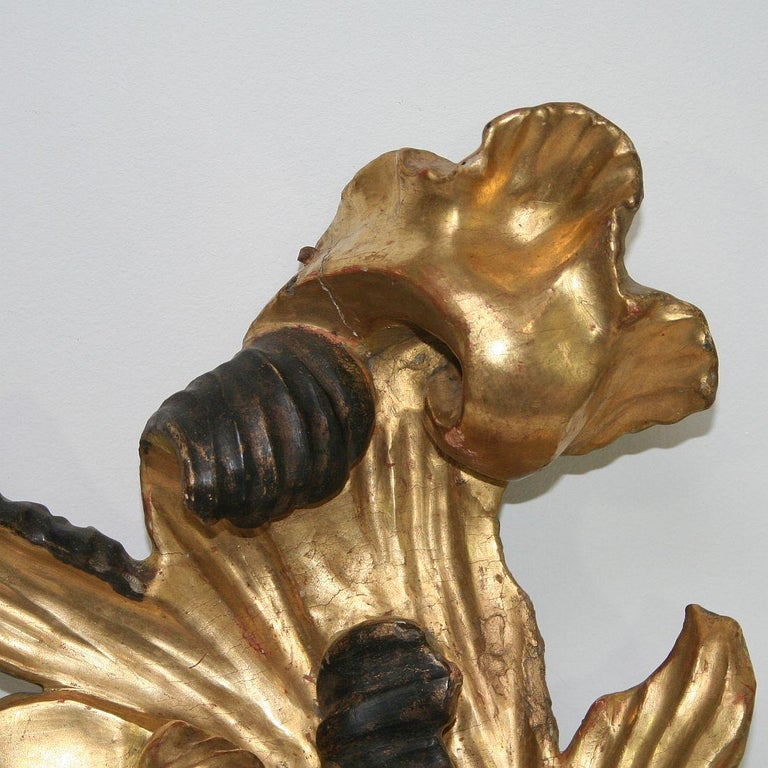Gilded 18th Century Italian Baroque Carved Wooden Curl For Sale 6