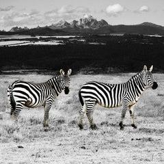 Photography Print - Animal Art - Gillie and Marc - Black White Zebras