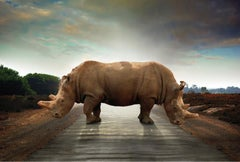 Photography Print - Animal Art - Gillie and Marc - Last Two Rhinos