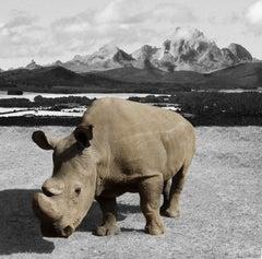 Photography Print - Animal Art - Gillie and Marc - Sudan the Rhino