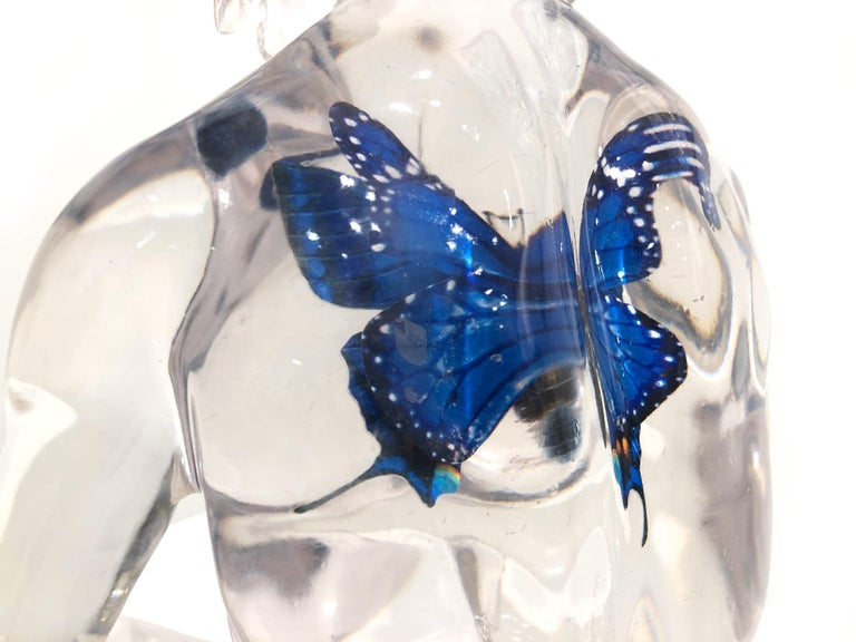 Butterfly Blue Dogman For Sale 14