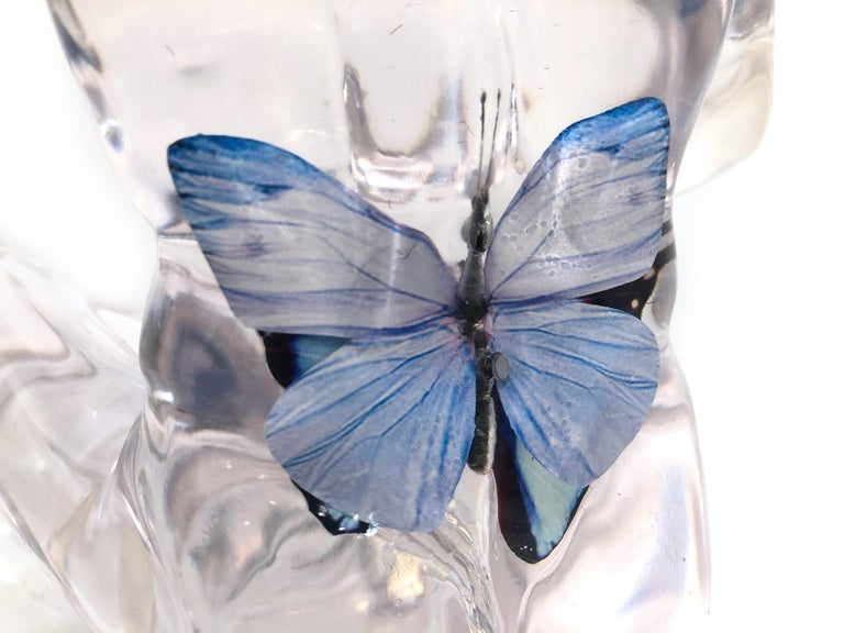 Butterfly Blue Dogman For Sale 15