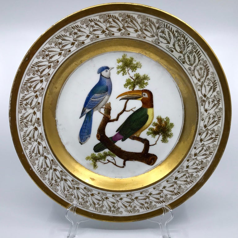 Gilt and painted neoclassical French Empire bird plate. Large old Paris Porcelain circular serving dish with hand painted gilt foliate scrolled border with wide bands centering a pair of birds on a tree limb; featuring a South American toucan from