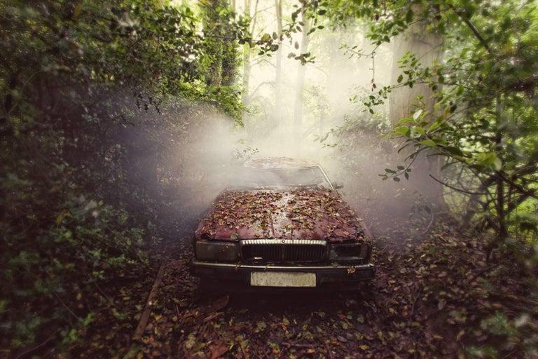 Gina Soden Landscape Photograph - Jaguar, Emergence series