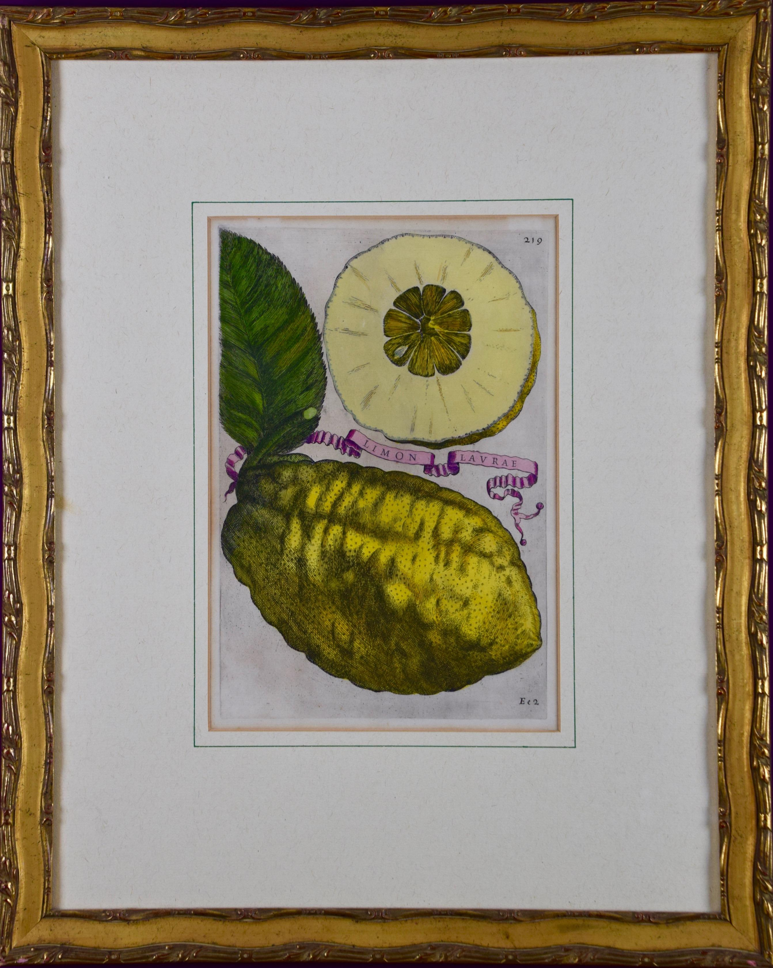 """""""Limon Lavrae"""", A Hand-colored 17th Century Engraving of Lemons by G. Ferrari"""