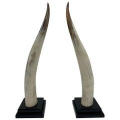 Glamorous Large Pair of Steer Horns on Black Lucite by Van Teal