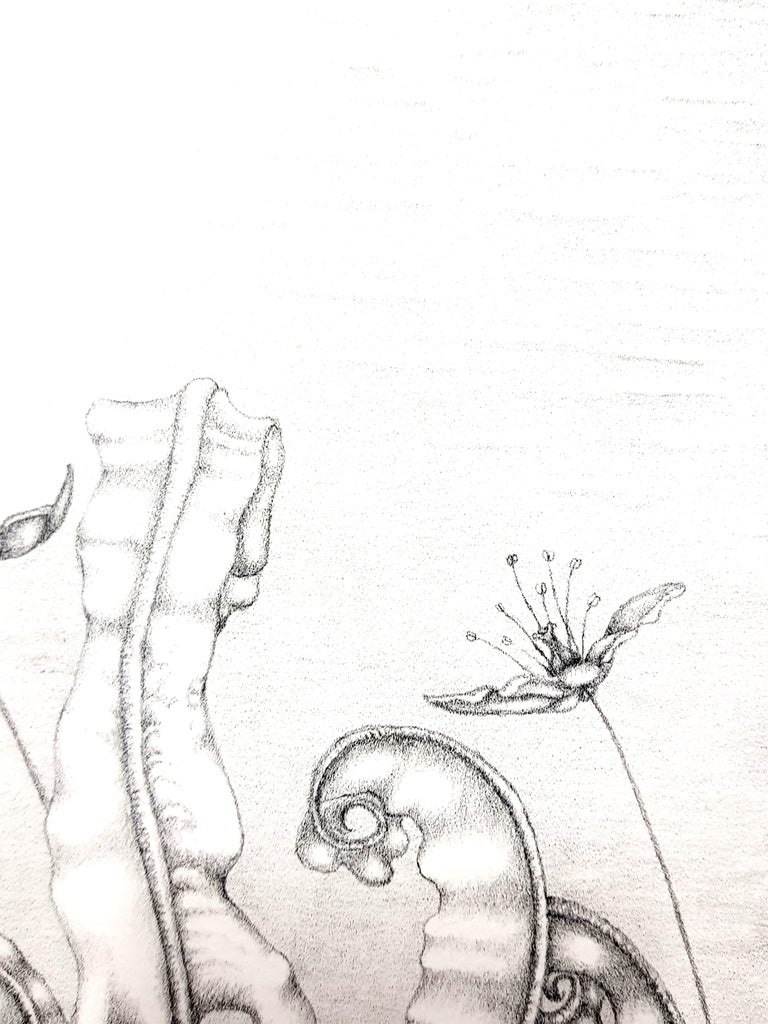 Gochka Charewicz - Herbarium - Original Signed Lithograph For Sale 4