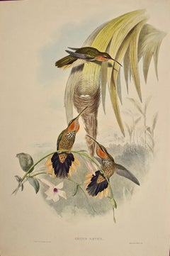 19th C. Gould Hand-colored Grypus Naevius, Saw-bill Hummingbirds, Nest & Eggs