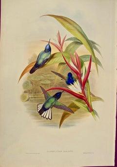 "19th Century Gould Hand-Colored ""Panoplites"", Jardine's Panoplites Hummingbirds"