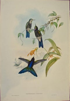 """19th Century Gould Hand-Colored """"Ramphomicron"""" Stanley's Thorn-bill Hummingbirds"""
