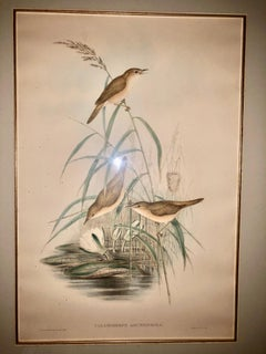 Gould & Richter Reed Warblers Lithograph
