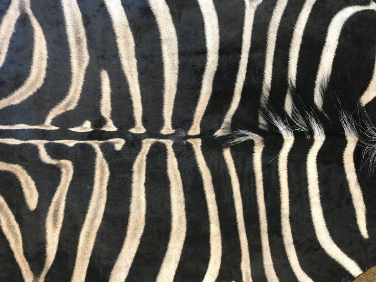 Grade A Equus Burchell Zebra Skin Rug For Sale At 1stdibs