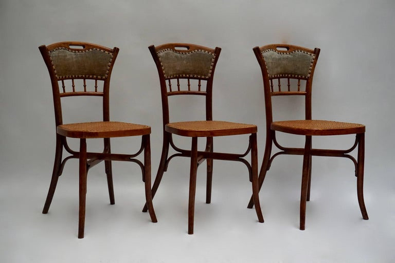 Great set of 40 Art Nouveau chairs in wood with cane seats. Measures: Height 87 cm, seat height 47 cm, width 43 cm, depth 48 cm.