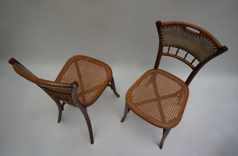 Cane Great Set of 40 Art Nouveau Chairs, circa 1900 For Sale