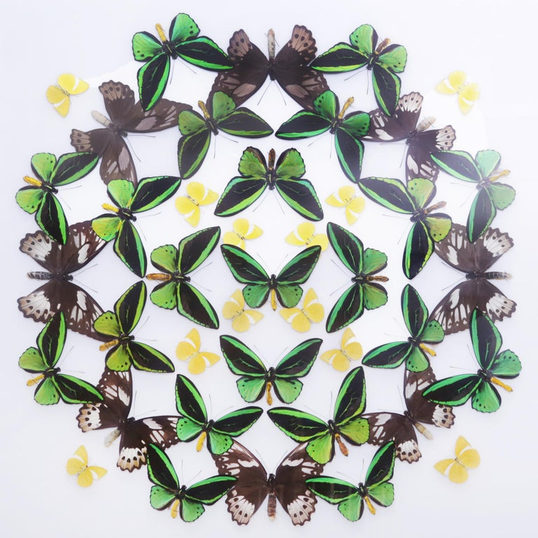 French Green and Yellow Butterflies Wall Decoration Under Glass Box Frame For Sale