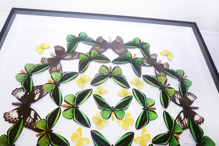 Hand-Crafted Green and Yellow Butterflies Wall Decoration Under Glass Box Frame For Sale