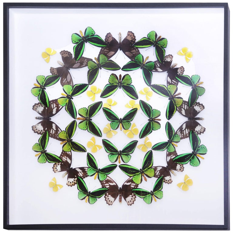 Green and Yellow Butterflies Wall Decoration Under Glass Box Frame For Sale