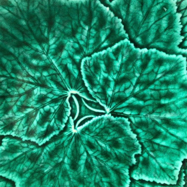 Green Majolica leaves plate signed Gien, circa 1890.