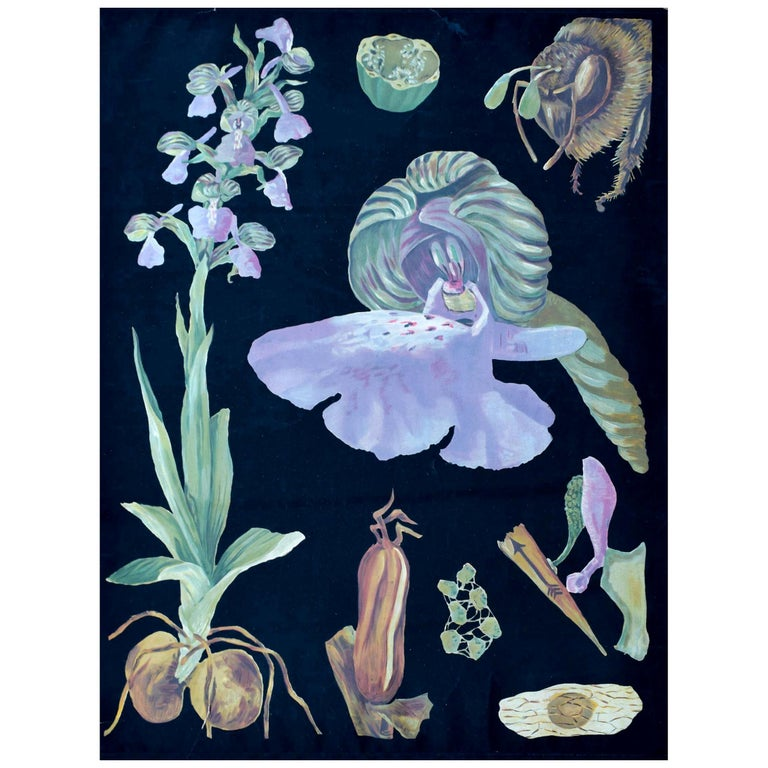 Green-Winged Orchid, Rare Vintage Botanical Wall Chart, Jung-Quentell-Koch For Sale