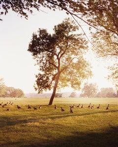 Geese and Tree (Sunset), Omaha, NE, 2005-2018 - Gregory Halpern