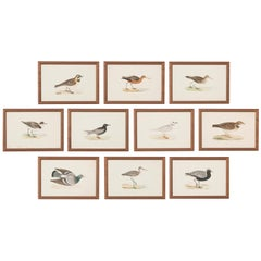 Group of 10 Antique Engravings, Coast Birds of England