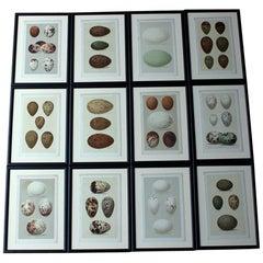 Group of 12 Framed Chromolithographs of British Birds' Eggs, Henry Seebohm, 1896