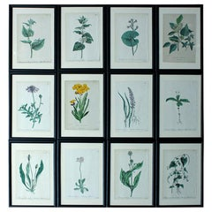 Group of 12 Framed Mid-19th Century Hand-Colored Botanical Lithographs