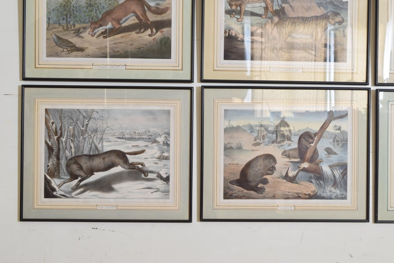 Group of 12 French Hand Colored Framed Engravings of Animals in Habitat For Sale 4