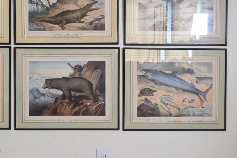 Group of 12 French Hand Colored Framed Engravings of Animals in Habitat For Sale 5